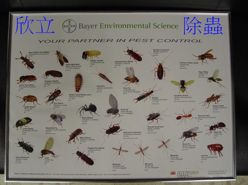 蛾蚋_推薦白蟻除蟲權威,專除白蟻,消滅白蟻,預防白蟻、各種木材害蟲 ...
